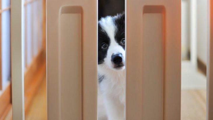 犬用ゲートを設置する場所5選