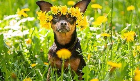 春でも犬は『熱中症』になる!注意すべき3つのことと予防策
