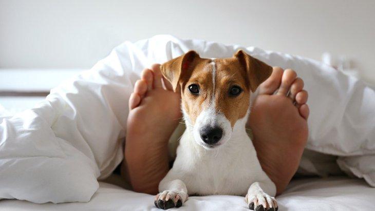 どんな意味?犬が好きな人の『足元』で寝る理由4つ