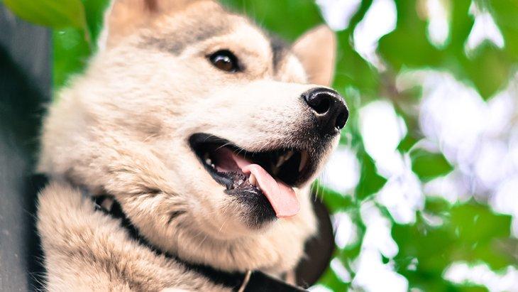 犬に嫌われる人の意外な10個の共通点