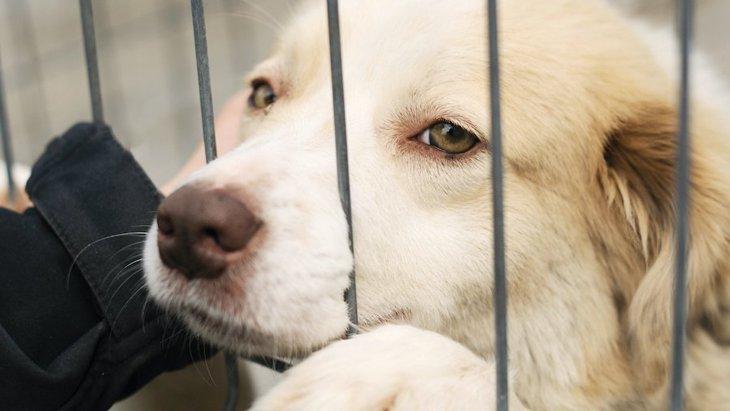 どうして?保護団体から犬を引き取るための条件が厳しい理由