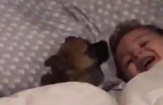 イチャイチャ♪仲良しな子犬ちゃんと赤ちゃん