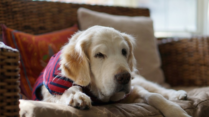 愛犬のために役立つ資格一覧
