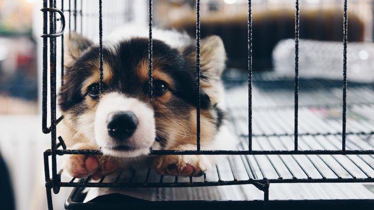 犬をひとりぼっちにするリスク4つ