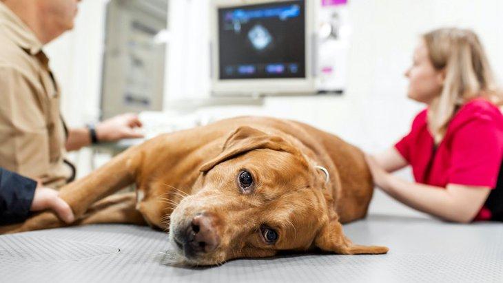 犬の胸水って何?完治するの?その症状や治療法まで