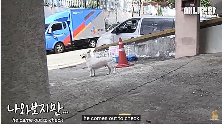 なぜ、犬はアパートの外に置いてきぼりにされたのか?それには理由が!