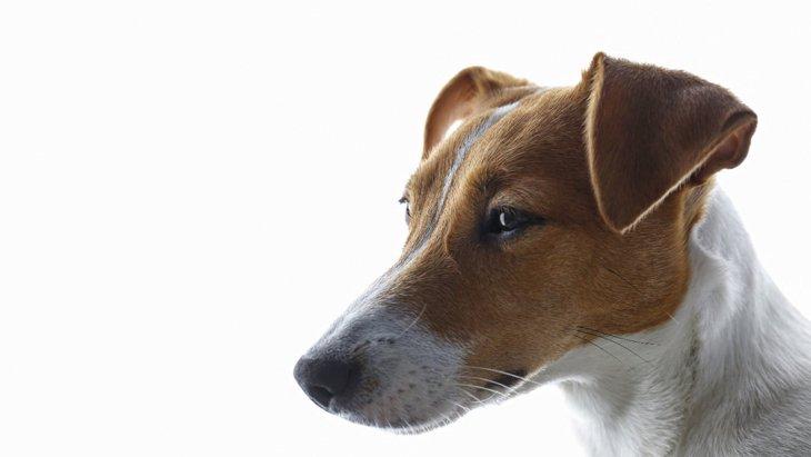 知らないうちに…!犬が苦しんでいる『飼い主のNG行為』4選