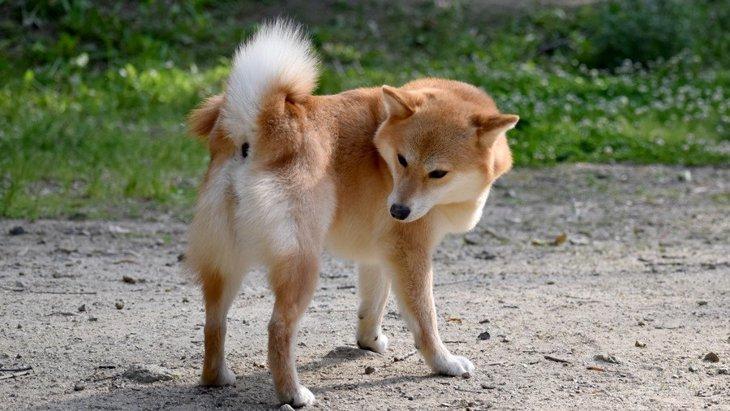 犬のおならが臭い…考えられる原因と対処法