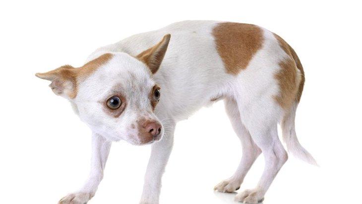 犬が叱られたときによく見せる態度や仕草4選