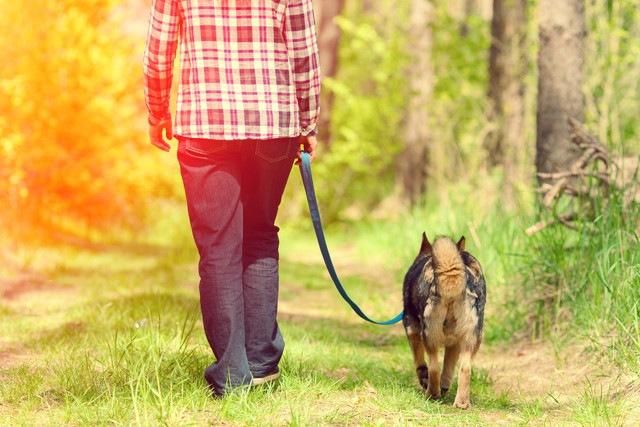 犬に散歩が必要な理由と適切な散歩時間