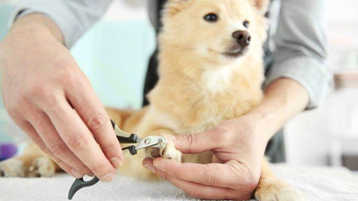 犬の爪切りが苦手な飼い主さん必見!上手な爪切りのコツ4つ