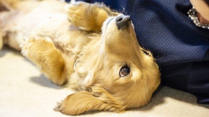 プレイバウとは?犬が遊びに誘うときにする代表的な仕草