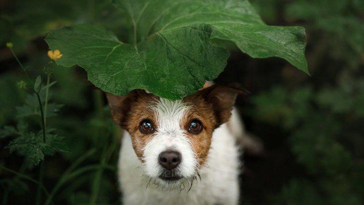 犬は『天気』で体調が変わる?雨の日は犬も憂鬱って本当?