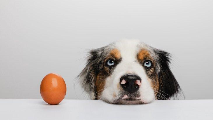 犬が卵を食べても大丈夫?与え方(生・焼き・ゆで)や注意点を解説!
