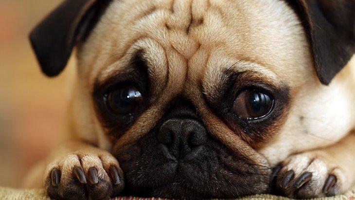犬が悲しそうな表情をしている時の心理4つ