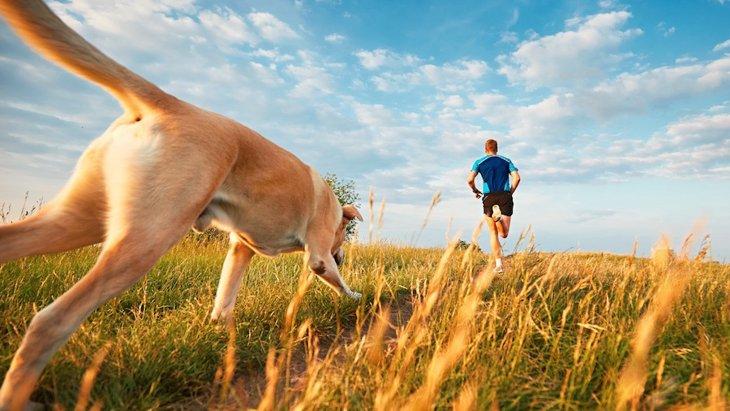 愛犬と一緒にトレイルランニング!必要な装備と注意点