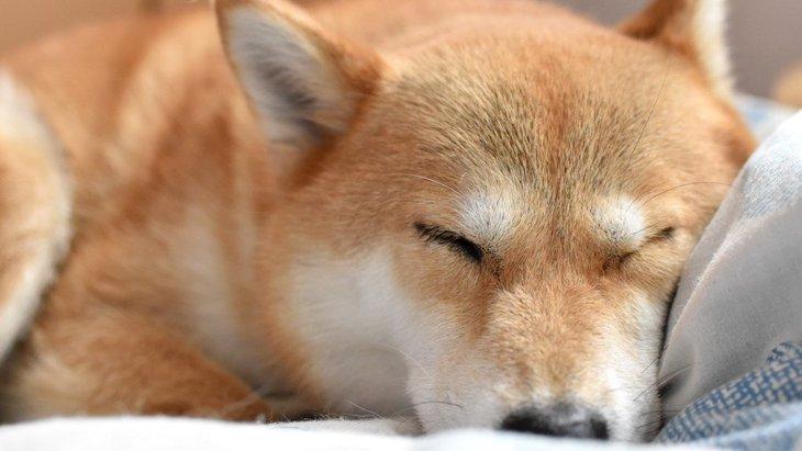 犬が飼い主の服や布団を好む2つの理由