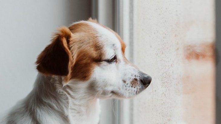 犬が『落ち込んでいる時』にしている仕草や態度4選