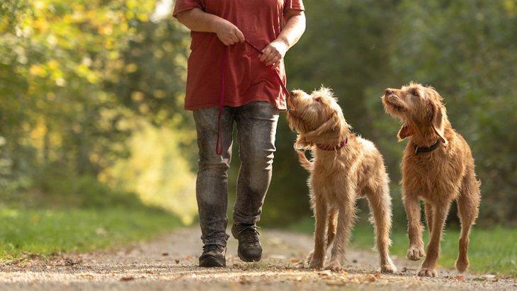 飼い主が評価した愛犬の「支配性」に関する調査研究