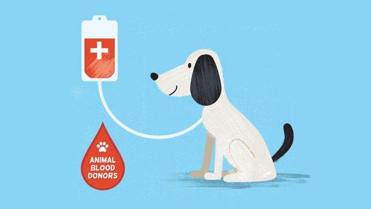 犬の血液型と日本における動物病院の輸血事情