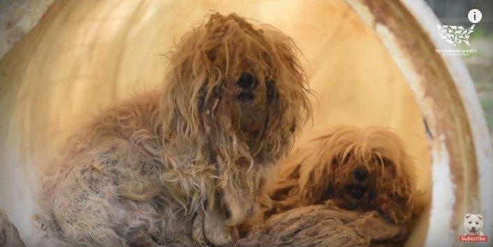 小型犬を中心に大量生産する子犬工場から350頭以上を救出!