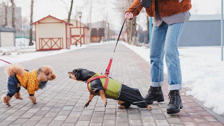 愛犬が『他の犬を威嚇』してしまう…やるべき対処法5選