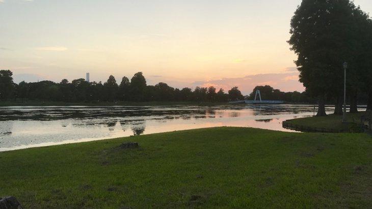とにかく美しい!水元公園で愛犬とリラックス散歩