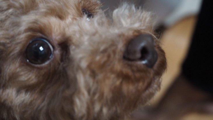 犬の不安を和らげる4つの方法