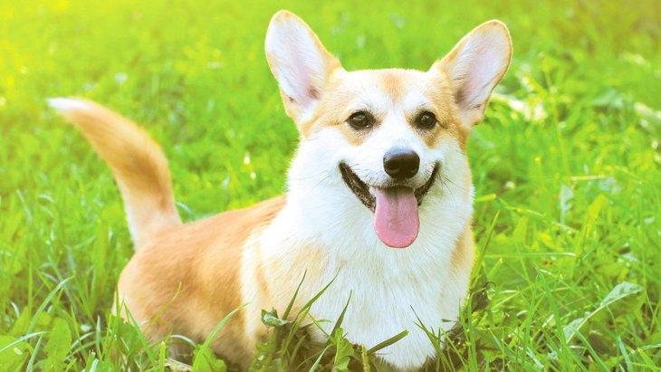 犬が尻尾をゆっくり振っている時の気持ち4選!リラックスしてる?それとも不安?