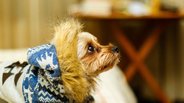 犬がコタツに入る3つの理由と注意してほしいこと