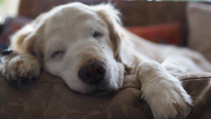 老犬介護に「完璧」を求めてはいけない。