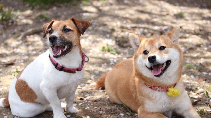 犬を『フレンドリーな性格』に育てる方法4選