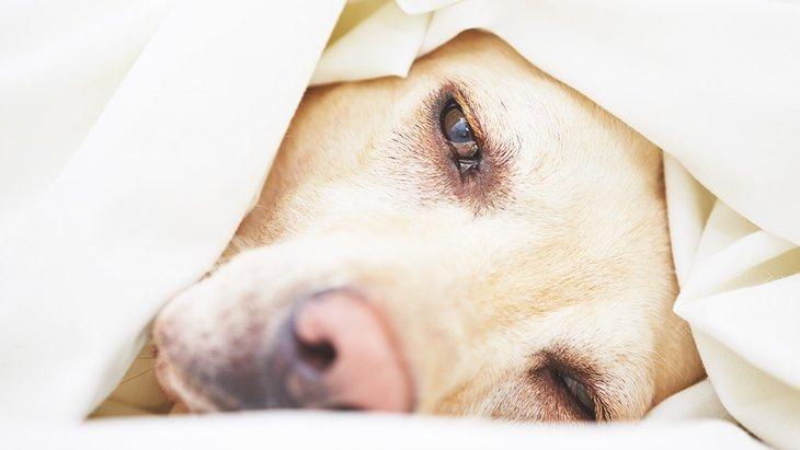 犬の腸内環境改善に朗報!?糞便移植で効果的に下痢を治療できる!
