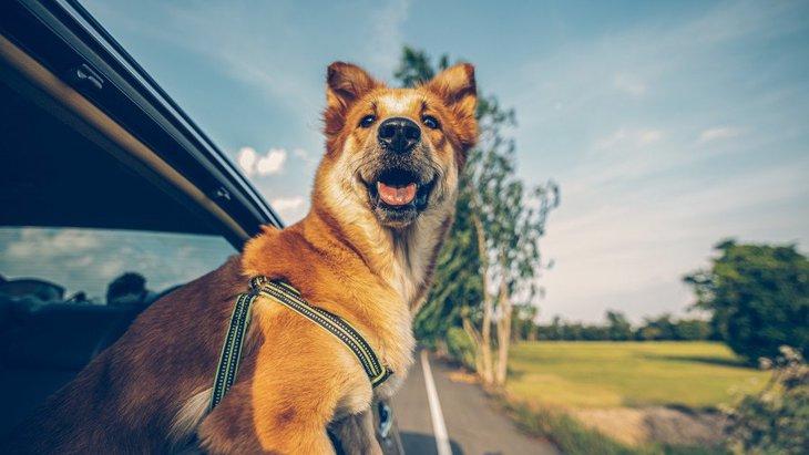 犬とドライブする時に絶対してはいけないNG行為4選