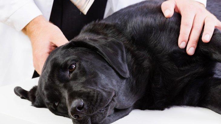 犬のホルモン異常で引き起こされる病気と症状