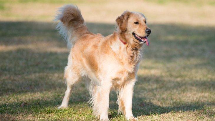 あなたの愛犬はどう?特に暑さに弱い犬種3選