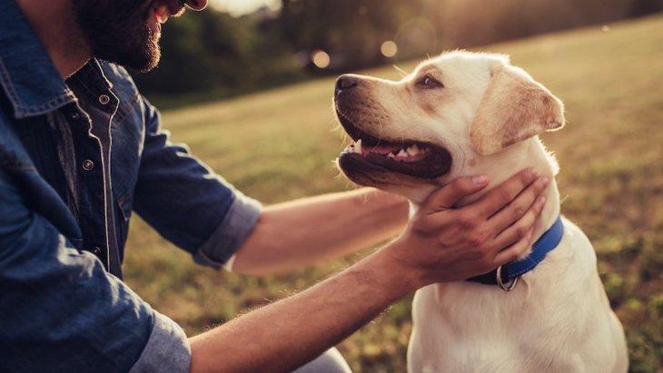 犬が穏やかな気持ちのときにする仕草4つ