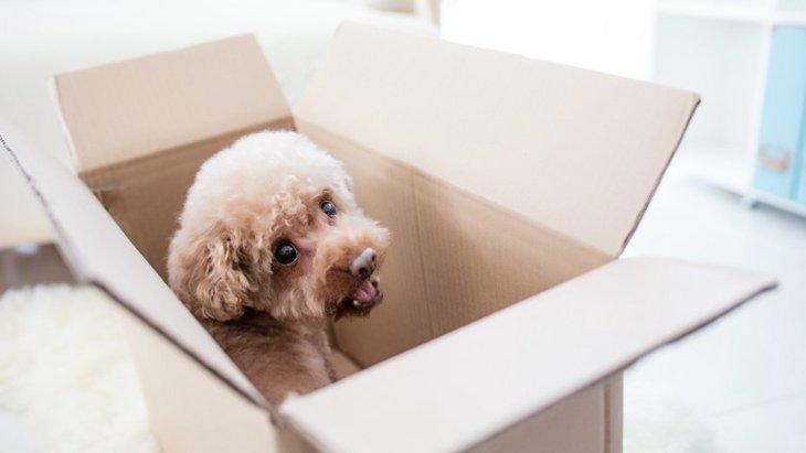 犬が喜ぶ『0円おもちゃ』の作り方!家にあるもので簡単につくる方法を解説