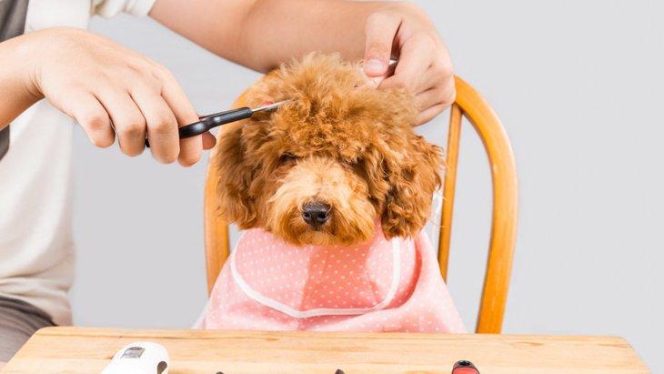 犬のヘアスタイルまとめ【トリミングの参考に】