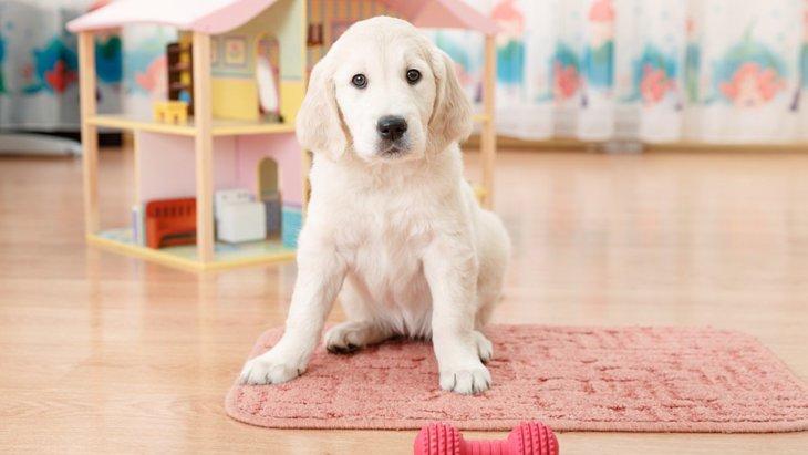 室内でもできる!犬にストレス発散させる方法4選