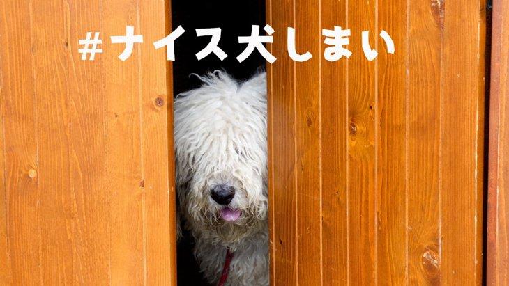 台風19号で「#ナイス犬しまい」が拡散!ペットの避難意識の変化