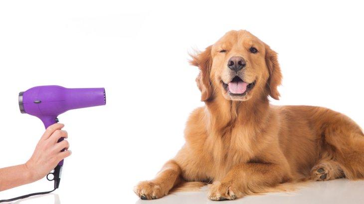 ドライヤーが苦手な犬の克服法!3つのパターン別対処法とは?