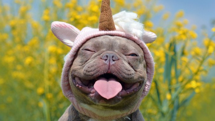 『鼻ぺちゃ犬』の飼い主が絶対に知っておくべき5つのこと