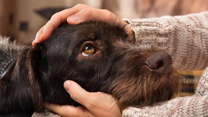犬が人の上に乗っかって眠る理由4選