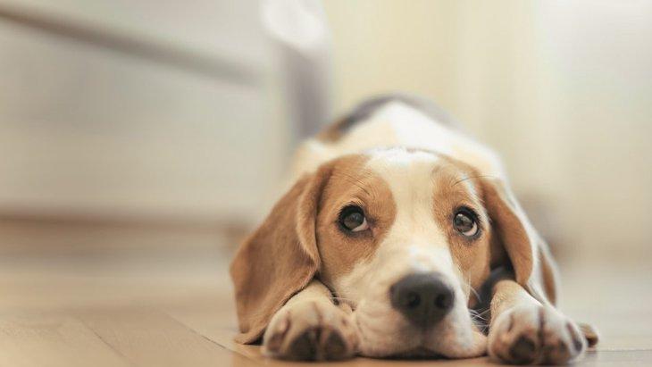 犬を心配しすぎる3つのデメリット