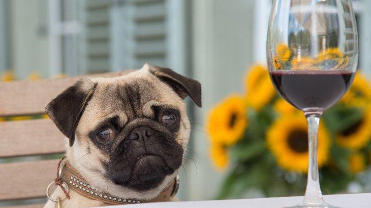 犬にとっては刺激が強すぎる『香り』5選