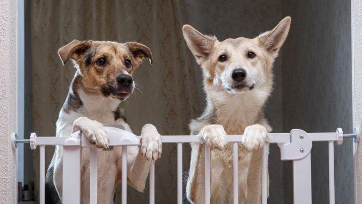 犬が遠くから飼い主を眺めている時の心理5選