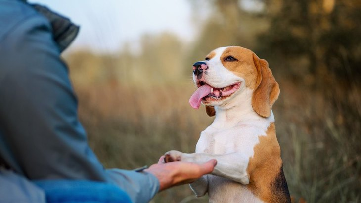 犬が『お手』を勝手にする心理3選!指示してないのになぜ…?