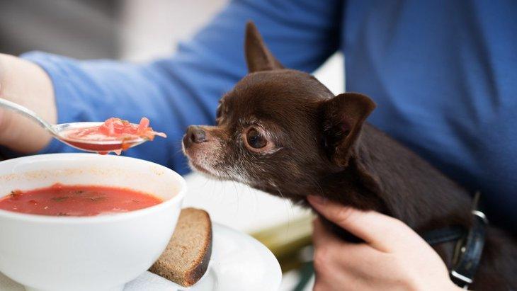 犬は生姜を食べても大丈夫?適量や生や加熱等の調理法、簡単レシピまで
