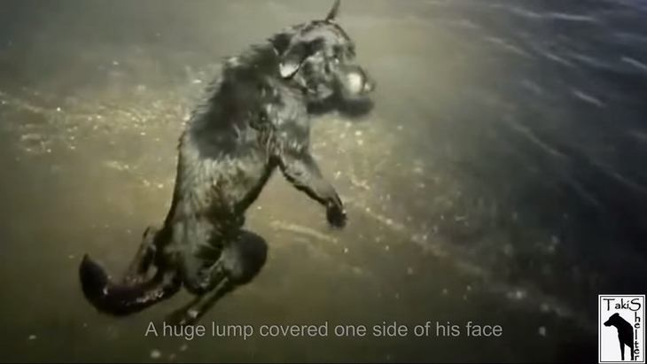 海の中に捨てられた動けない犬。末期がん、脊椎骨折…でも瞳は輝いていた